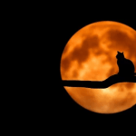 Image of cat silhouette at night