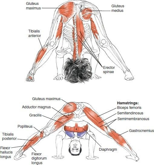 Anatomy And Physiology For Yoga Students Pdf   Yourviewsite.co