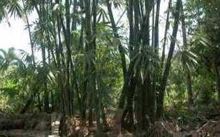 Brancher au Bangladesh