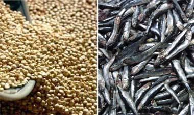 anchoveta y quinua