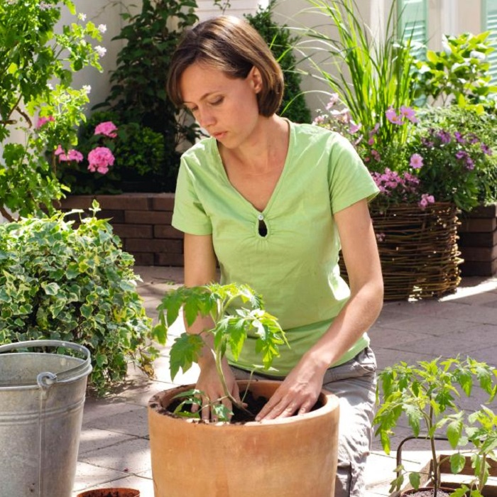 patio vegetable plants growing instructions suttons gardening grow how