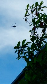 Choppers fly on sunny days