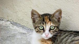 cat-1522508_1280