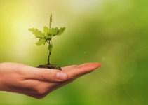 Entorno: Hildo do Candango afirma que preservar meio ambiente é prioridade