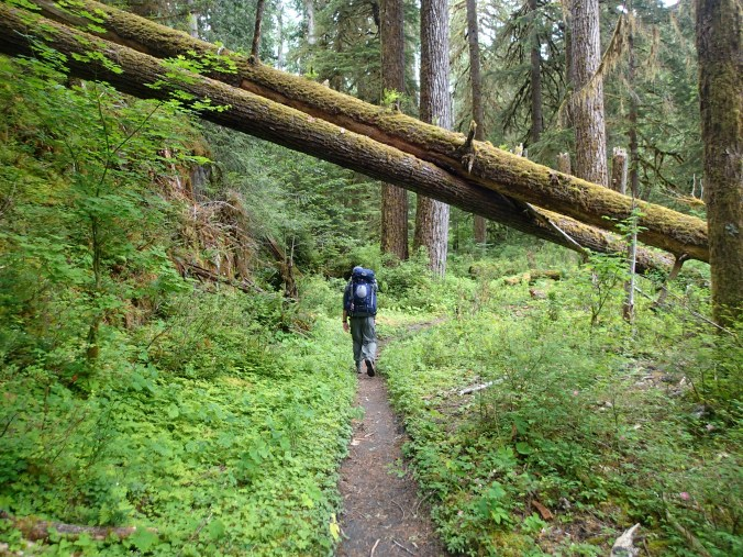 Hiking On The Hoh River Trail