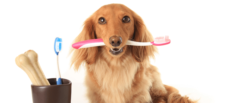 Five Dental Health Tips for Your Furry Friends