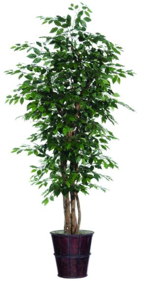 6-7 foot Artificial Ficus Trees, $30 each