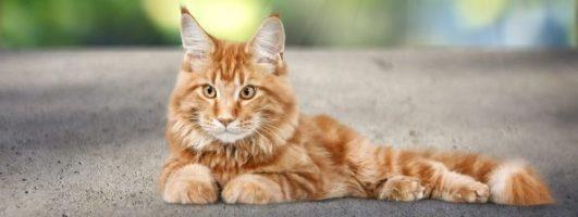 Katzenkrankenversicherung Katze
