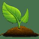 Die Pangaea pflanzt für jeden Vertrag einen Baum