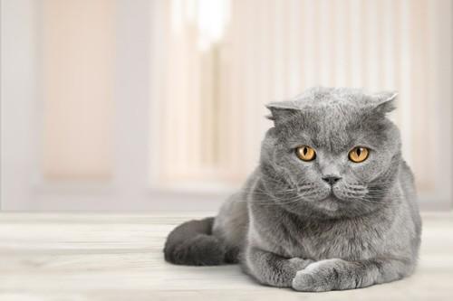Katzenkrankenversicherung immer beliebter