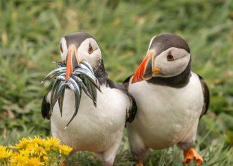 Animales más graciosos fotos premiadas (12)