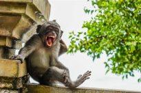 Animales más graciosos fotos premiadas (17)