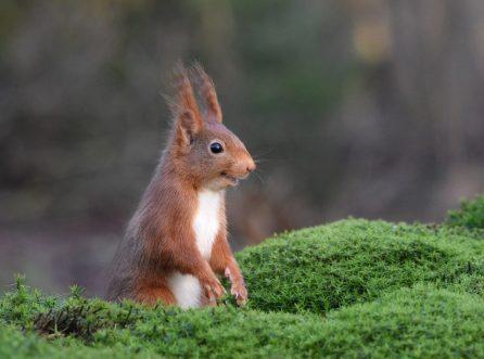 Animales más graciosos fotos premiadas (23)