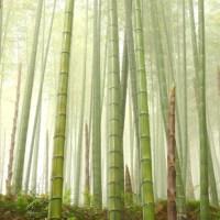 Las propiedades mecánicas del bambú