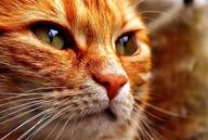 cat-1678009__340