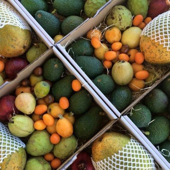 comprar surtido de frutas tropicales Málaga