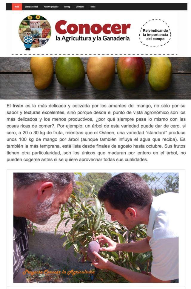 Artículo Conocer la Agricultura Descubriendo el Mango