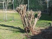 Aspecto final del arbusto (1)