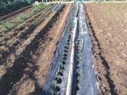 Plantación terminada