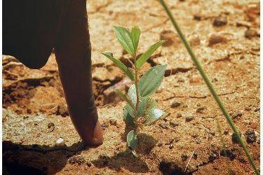Ecosia, el buscador más sostenible.