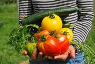vegetales recien recolectados.