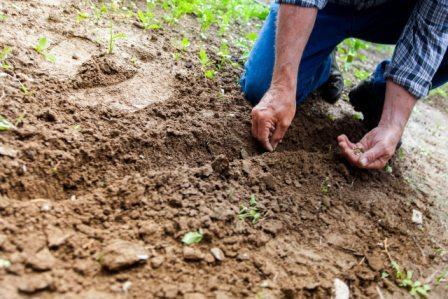 un persona sembrando el la tierra de su huerto.
