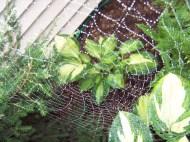 Charlotte's web 1, https://huffygirl.wordpress.com, © Huffygirl 2012