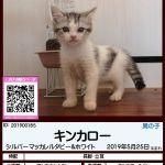 《1頭限定》ラッキープライス☆77,700円☆ハッピープライス♡88,800円♡