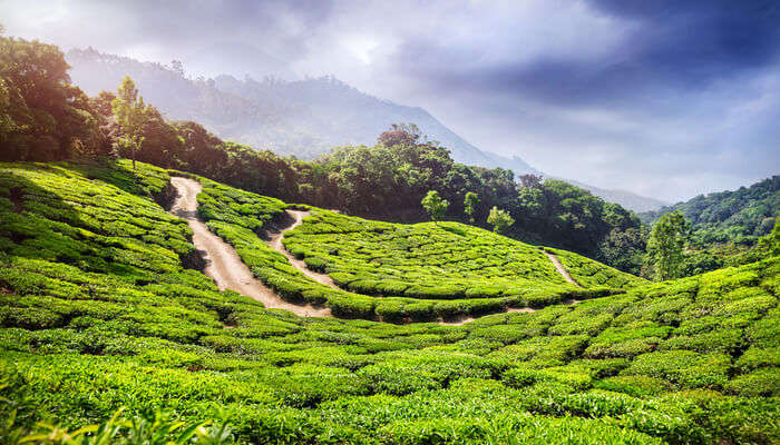 Awesome Parks In Munnar