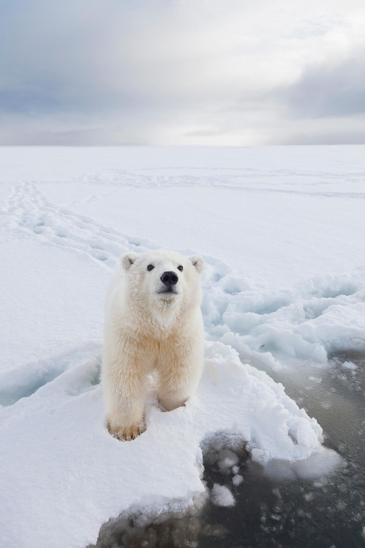 Arctic Alaska Photo Tour