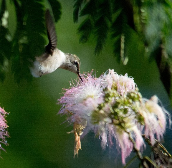 Blackburnian Warbler At Governor Bridge Natural Area My