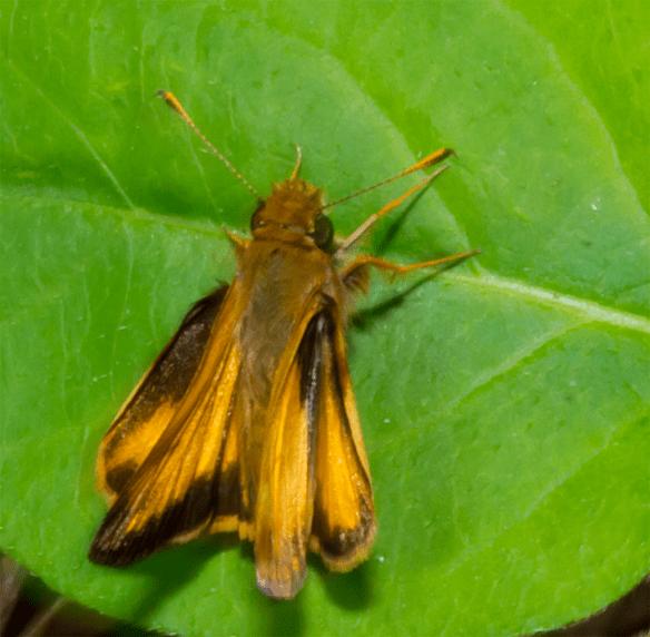 Moth 16