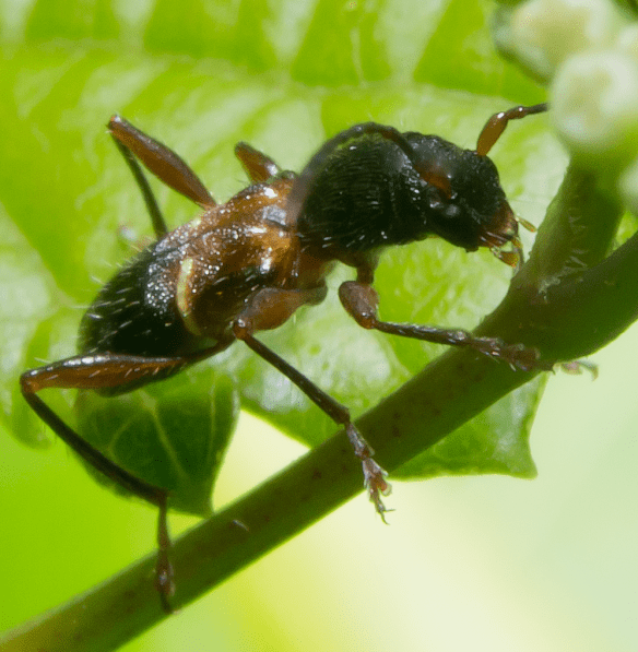 Insect 412