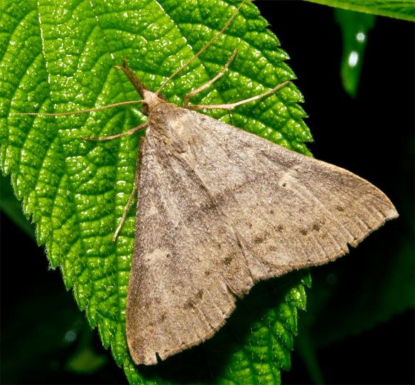 Moth 42