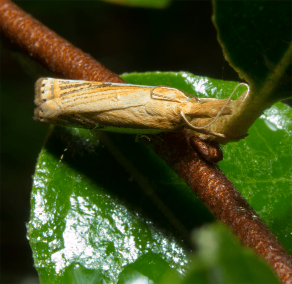 Moth 46