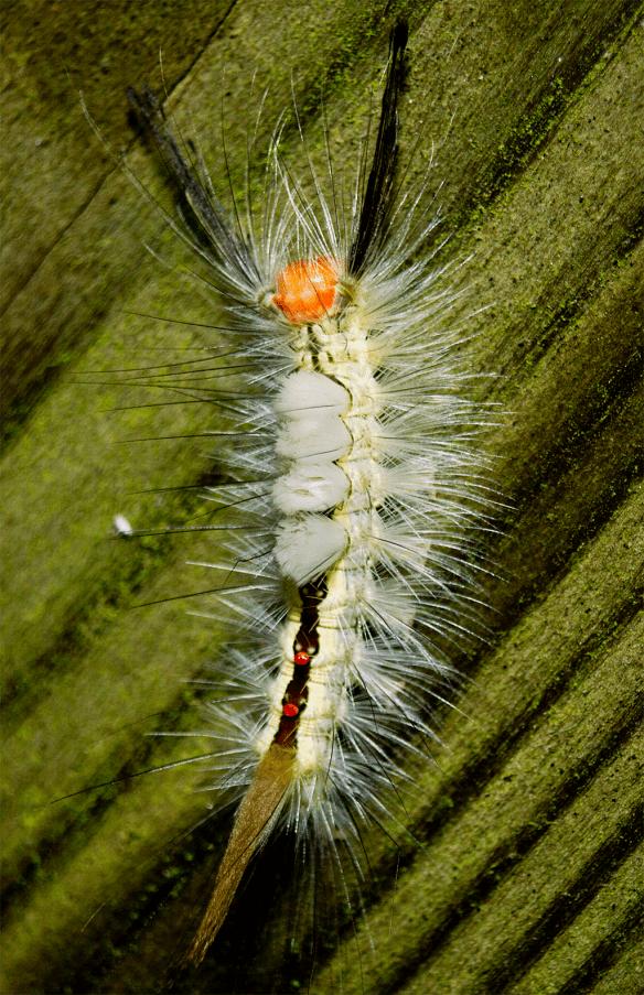 Caterpillar 98