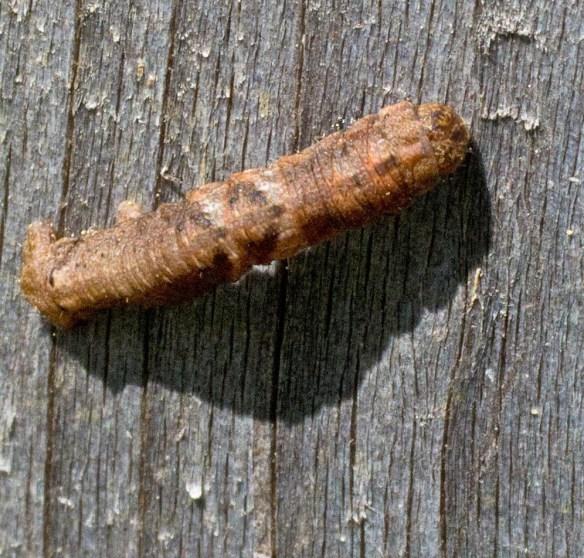 Caterpillar 206