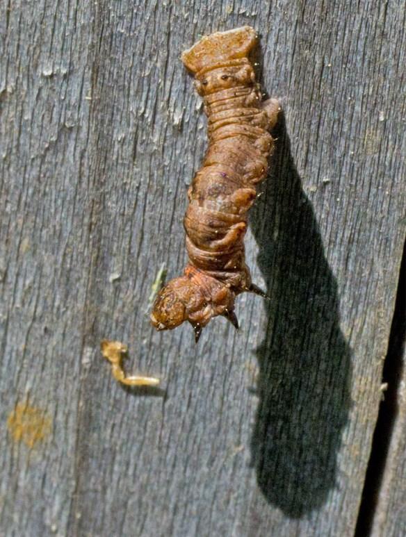 Caterpillar 207