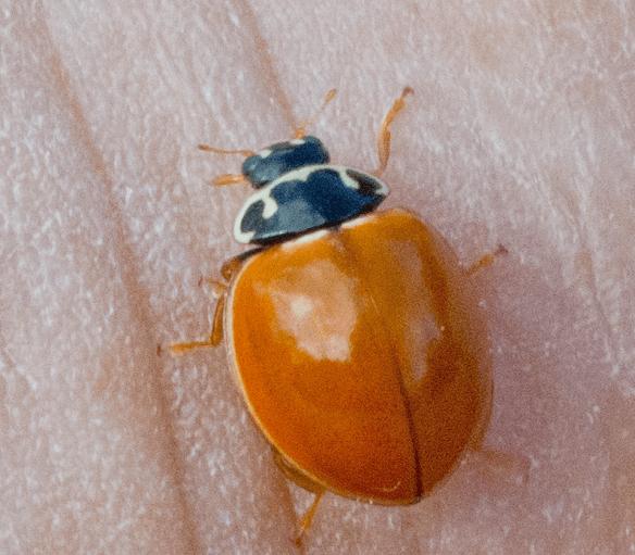 Ladybug 42