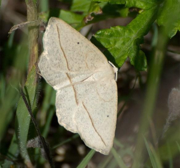 Moth 201