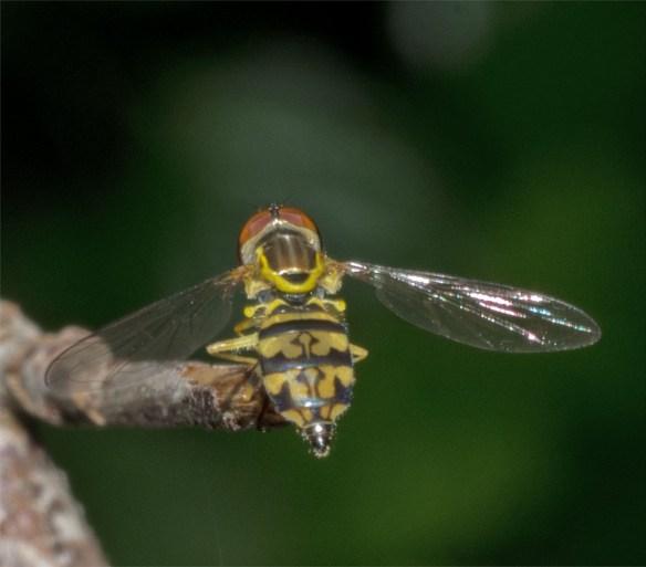 Bee 211