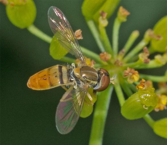 Bee 214
