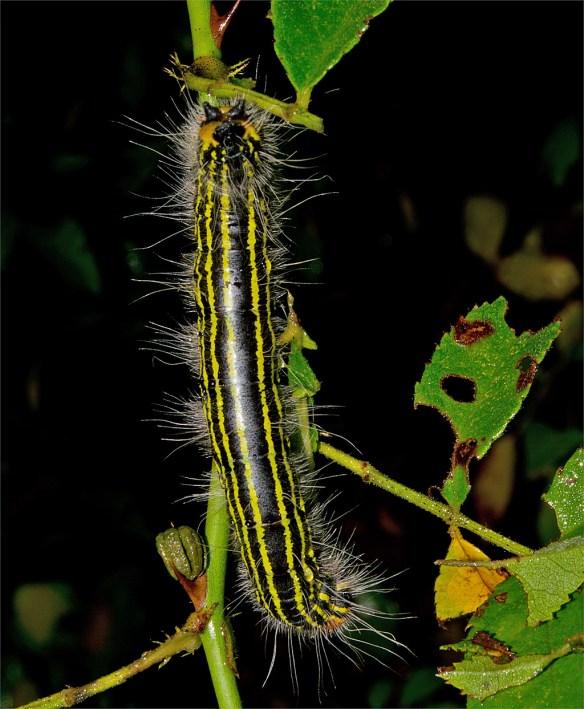 Caterpillar 219