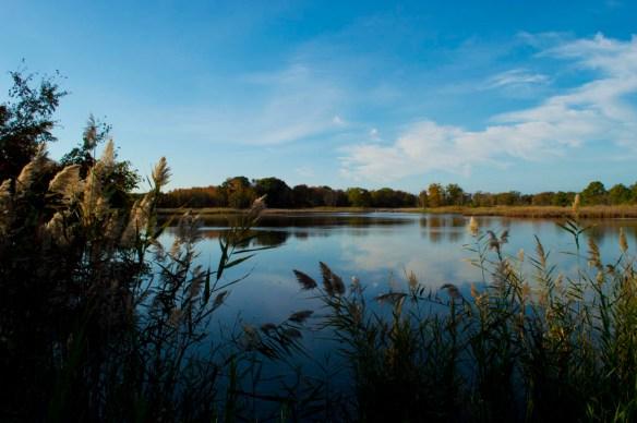 Marsh Pond 7