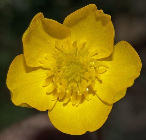 Flower 63