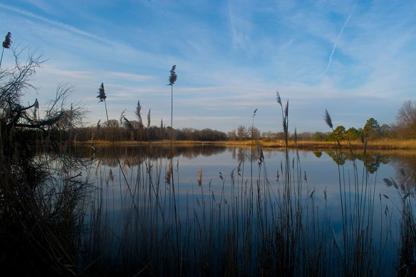 Marsh Pond 10