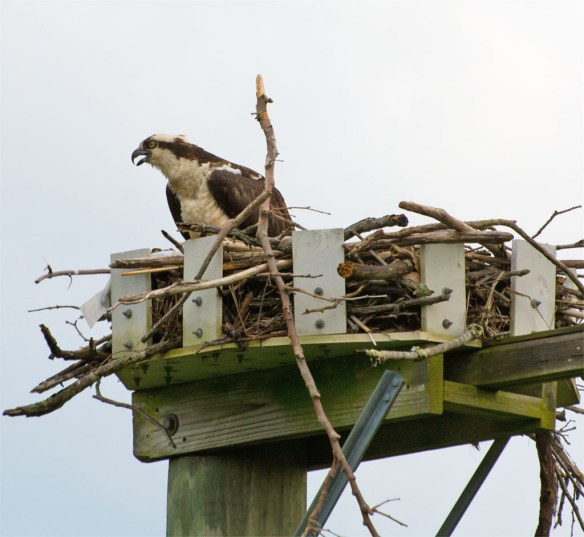 Osprey 2016-47