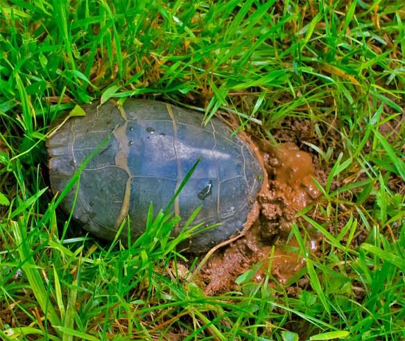 Turtle 45