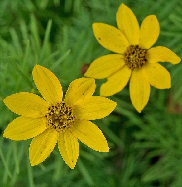 Flower 77