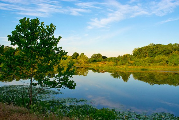 Lake Artemesia 29